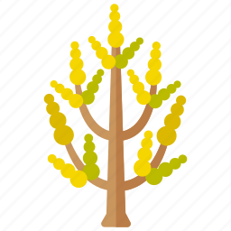 botanical, branches, ginkgo, leaves, tree icon