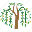 branches, fronds, river, tree, vegetation, weeping, willow icon
