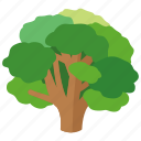 beech, botanical, broccoli, climbing, nature, park, tree icon
