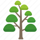 climbing, forest, nature, park, sassafras, tree icon