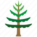 evergreen, aspen, tree, pine, coastal, beach