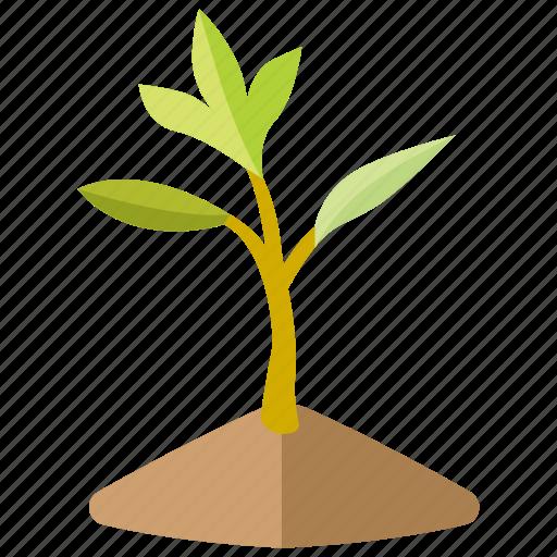 baby, botanical, growing, nursery, sapling, sprout, tree icon