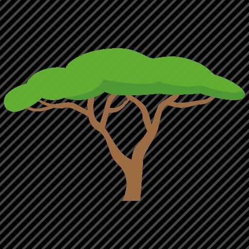 acacia, africa, plain, plains, safari, savannah tree, tree icon