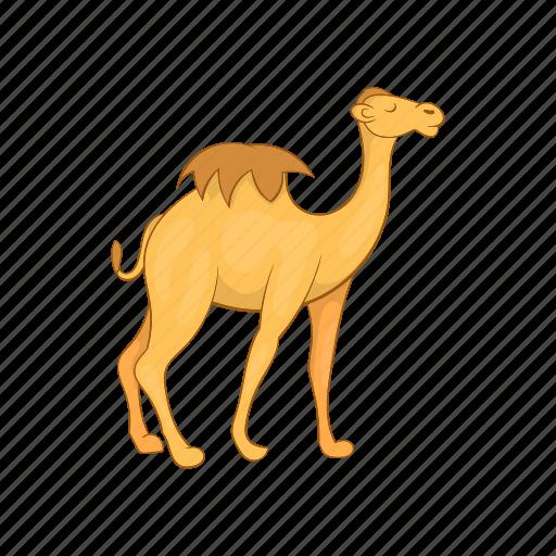 animal, camel, cartoon, desert, design, sign, travel icon