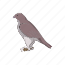 animal, cartoon, falcon, hawk, mascot, sign, wing icon
