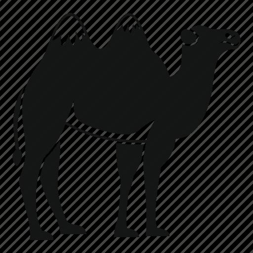 animal, arab, camel, desert, emirates, travel, united icon