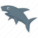 animal, fish, shark, whale, wildlife icon