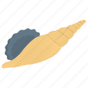 fox shell, nautilus, seashell, underwater insect icon