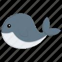 dolphin, fish, mammal, marine animal, sea life