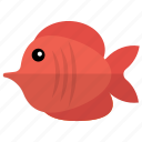 angelfish, fish, red tang, saltwater fish, tang fish icon