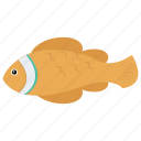 aquatic fish, chum salmon, fish, freshwater fish, tench icon