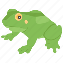 amphibian, animal, aquatic frog, frog, sea frog icon