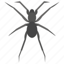 animal, bug, insect, scary insect, spider icon
