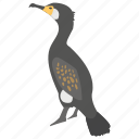 aquatic bird, cormorant, bird, phalacrocoracidae, shags icon