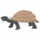 animal, sea animal, sea life, tortoise, turtle icon