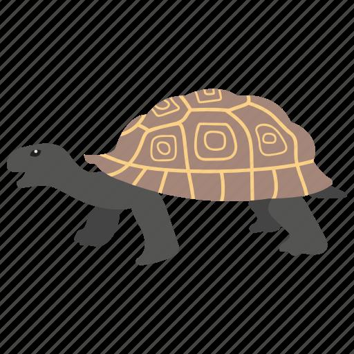 Animal, sea animal, sea life, tortoise, turtle icon - Download on Iconfinder