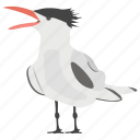 crested tern, greater crested, ocean bird, seashore bird, swift tern icon