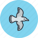bird, crow, fly, magpie, seagull icon