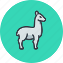 animal, lama, llama, wool icon