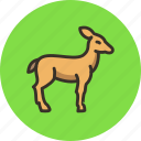 animal, deer, doe, gazelle, hind, springbok icon