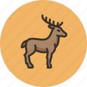 animal, deer, elk, hoof, horns icon