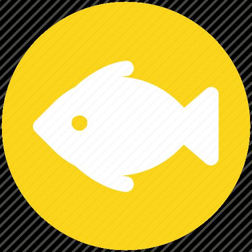 Food, seafood, water, fishing, animal, fish icon