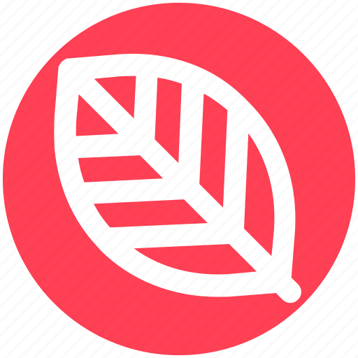 Ecology, leaf, nature, plant icon - Download on Iconfinder