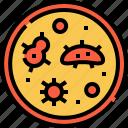 petri, dish, grem, virus, bacteria, laboratory