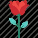 blooming, flower, freshness, rose, rosebud icon
