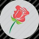 flower, heart, love, propose, rose, valentine