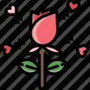 flower, gift, love, present, romantic, rose, valentine