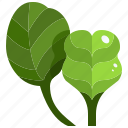 diet, food, healthy, nature, spinach, vegan, vegetable icon