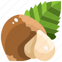hazelnut, natural, nut, nuts, organic, seed, seeds icon