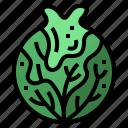 cabbage, diet, food, vegan