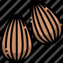 almond, dried, food, fruit, gastronomy, healthy, vegan icon