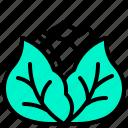 cabbage, harvest, vegetable, vegetarian, veggie icon