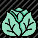 cabbage, harvest, vegetable, vegetarian, veggie
