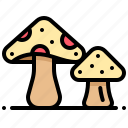 vegetable, vegetarian, harvest, veggie, mushroom