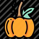harvest, pumpkin, vegetable, vegetarian, veggie icon