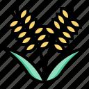 harvest, plant, rice, vegetable, vegetarian, veggie icon