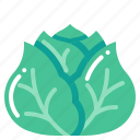 cabbage, harvest, vegetable, vegetarian, veggie icon