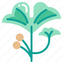 ginkgo, harvest, vegetable, vegetarian, veggie icon