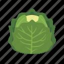food, heat, iceberg, leaf, salad, vegetable, vitamin icon