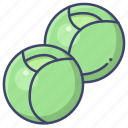 brussels, sprouts, vegetable icon