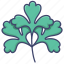 coriander, herb, leaf, parsley icon