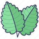 herb, leaf, menthol, mint icon