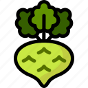 food, healthy, kohlrabi, organic, vegan, vegetable, vegetarian icon