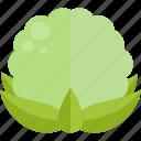 cabbage, cauliflower, food, vegetables icon