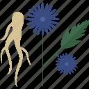 flower, food, seeds, vegetables