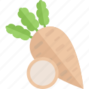 food, garden, plant, vegetables icon